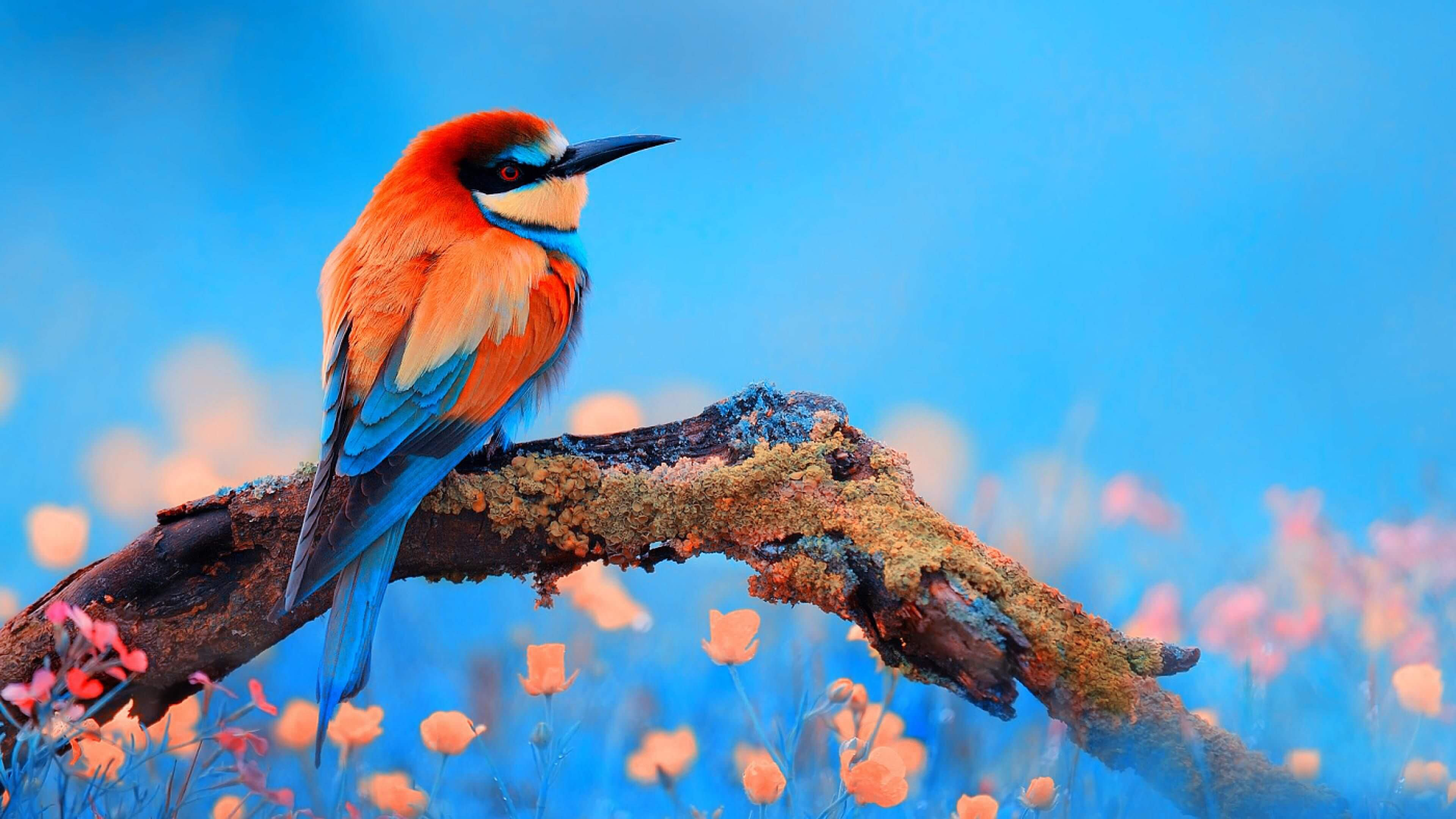 Colorful 4k Birds HD wallpapers for pc