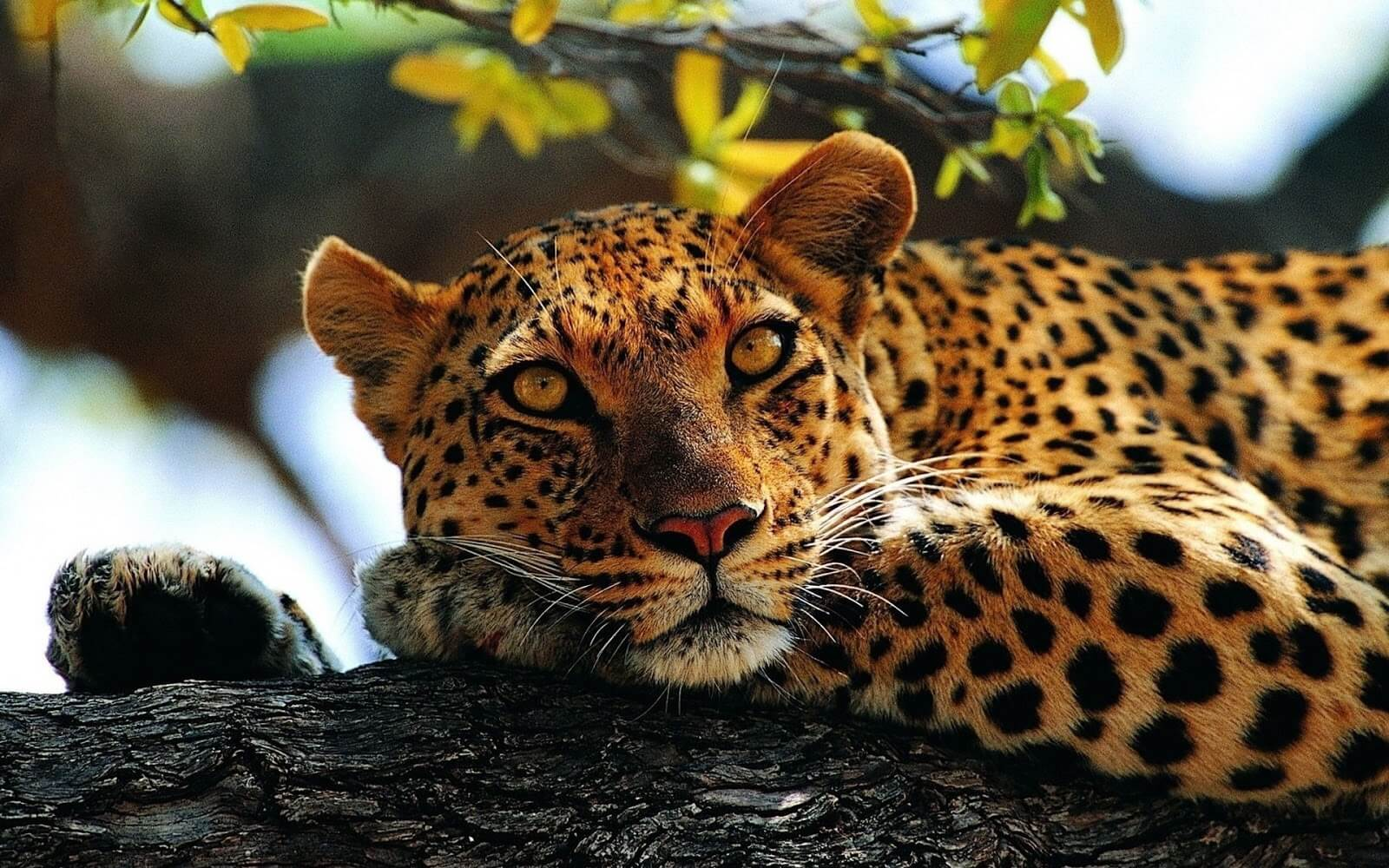 Wild Animal Pictures and Photos HD