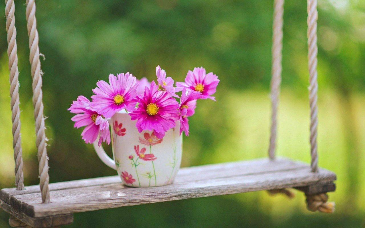 Most Beautiful Flowers Wallpapers Free Download Great Love Art